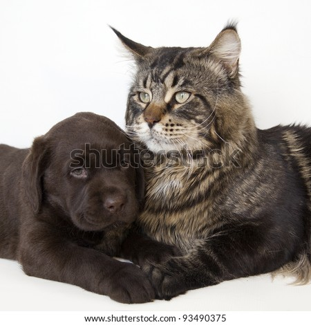 Cat and puppy - stock photo