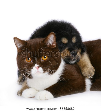 Cat and puppy on white background. - stock photo