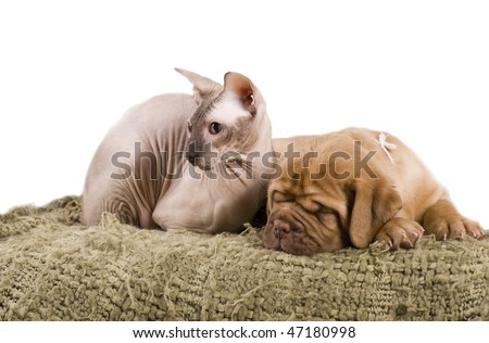 Cat and puppy resting together on bed - stock photo