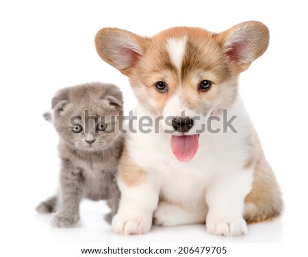 cat and puppy sitting in front and looking at camera. isolated on white background