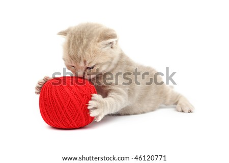cat and red - stock photo
