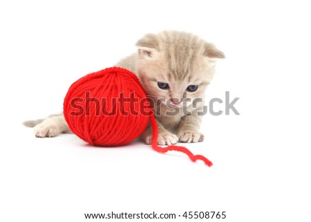 cat and red wool - stock photo
