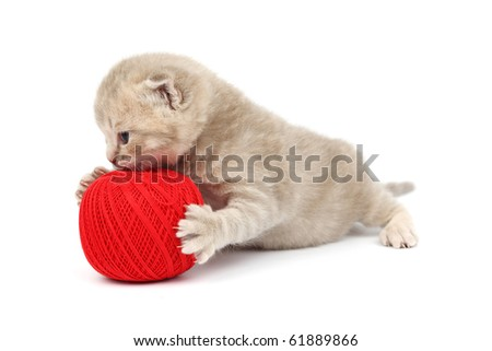 cat and red wool ball - stock photo