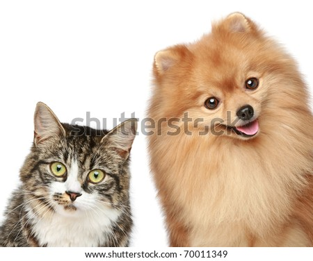 Cat and Spitz puppy on a white background - stock photo