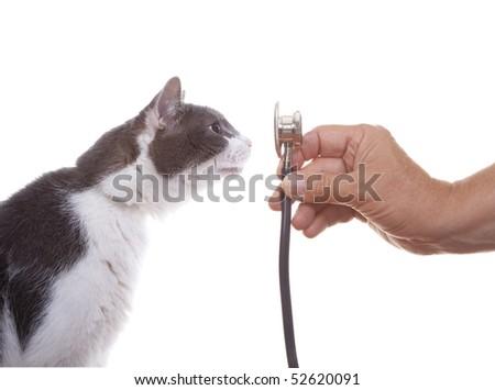 Cat and Stethoscope Isolated on White Background - stock photo