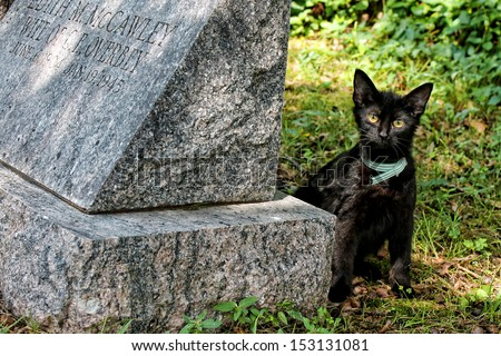Cat and Tombstone  - stock photo