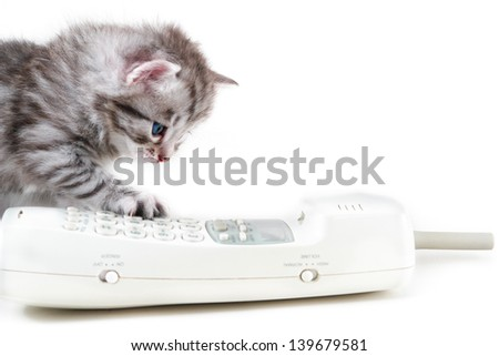 Cat and wireless phone handset - Isolated on white background - stock photo