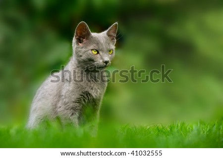 cat animal kitten green outdoor - stock photo