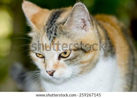 Cat,Animal portrait - stock photo