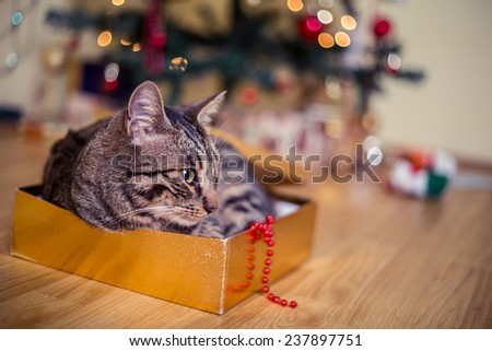 Cat as a present - stock photo