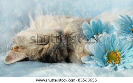 Cat asleep amongst flowers - stock photo
