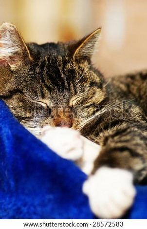 Cat asleep, enjoying sunny springtime, focus on head with great dof. - stock photo