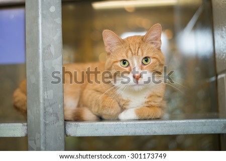 cat at animal shelter housing - stock photo