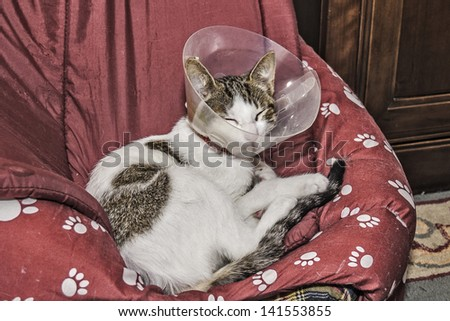 Cat at home with an elizabethanian collar, protection in order to don't lick herself after a surgery - stock photo