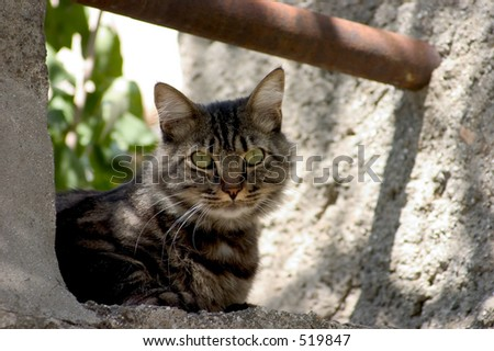 Cat at rest on a stone ledge