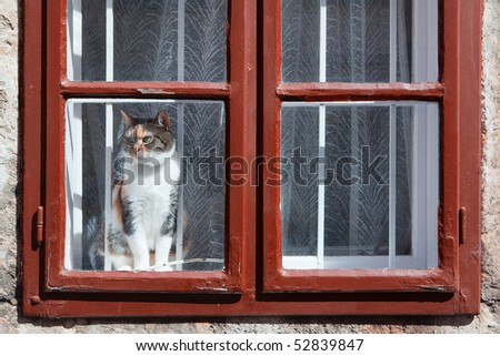 Cat at the window - stock photo