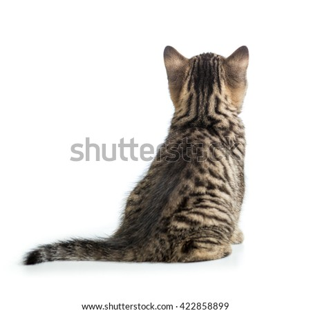 Cat back view. Kitten sitting isolated on white.