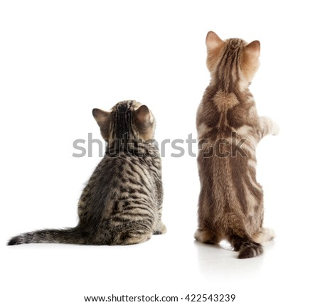 Cat back view. Two kittens sitting isolated on white. - stock photo