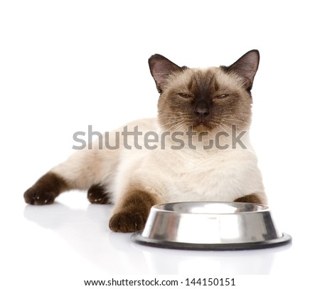 Cat begging for food.  isolated on white background - stock photo