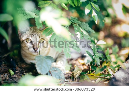 cat behind leaves - stock photo