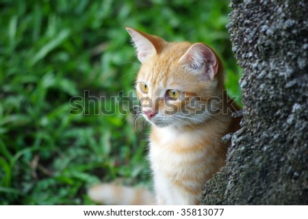 Cat behind to a tree