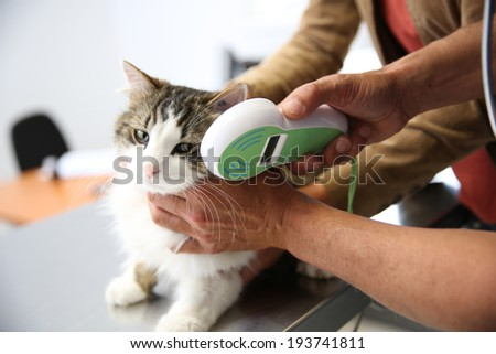 Cat being examined in vet clinic - stock photo