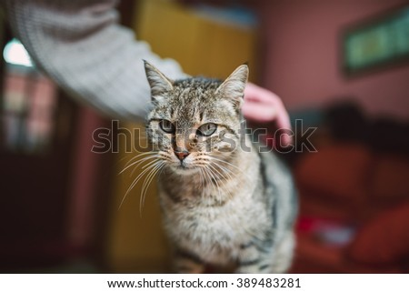 Cat being scratched by a human hand - stock photo
