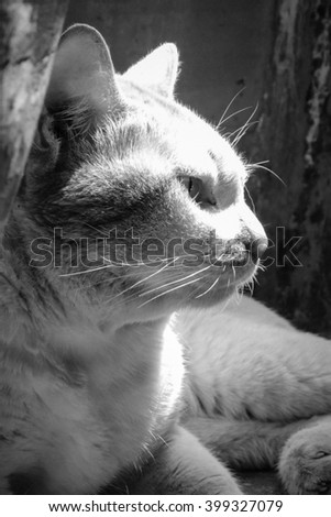 cat ,black and white