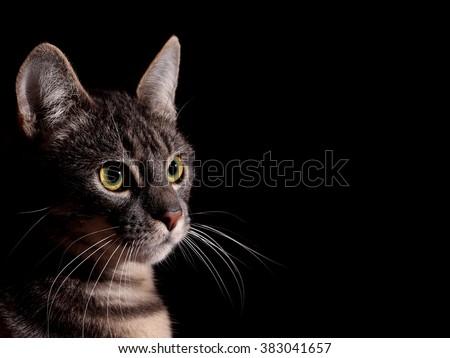 stock-photo-cat-black-background-3830416