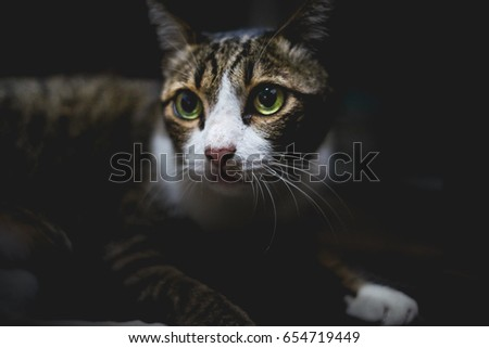 cat black background