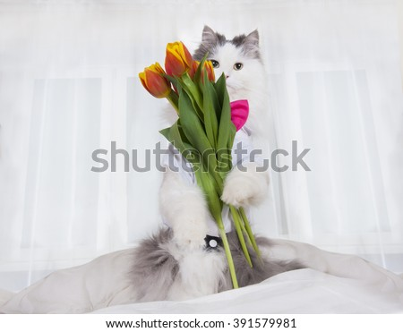 cat brought a bouquet of tulips in a bed mistress - stock photo