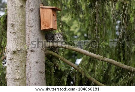 Cat by a bird box on the tree - stock photo