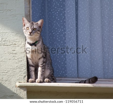 cat by the window - stock photo