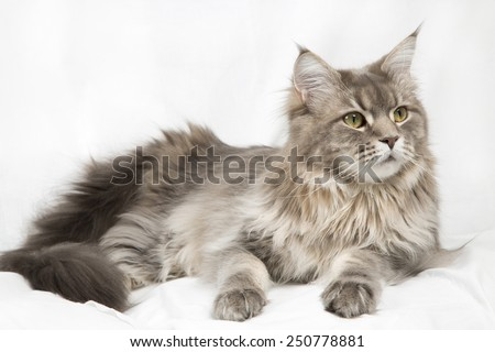 cat/cat 41/cat portrait - stock photo