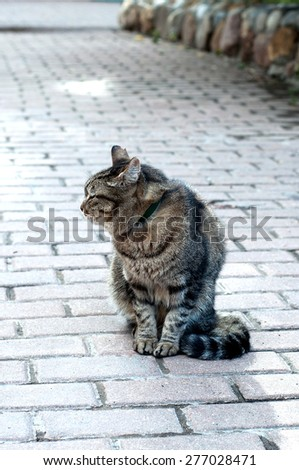Cat. Cat turned away from the photographer - stock photo