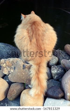 Cat catches fish - stock photo