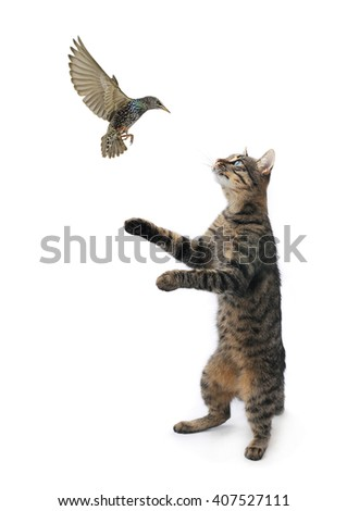 cat catches to bird on a white background