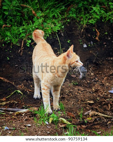 Cat catching a mouse - stock photo