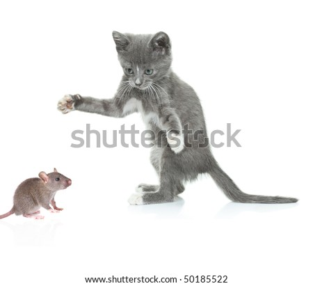 Cat catching a mouse isolated against white background - stock photo