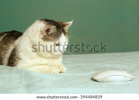 cat chasing computer mouse - stock photo