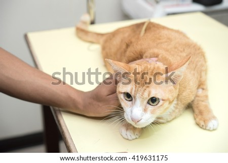 cat check up at animal hospital