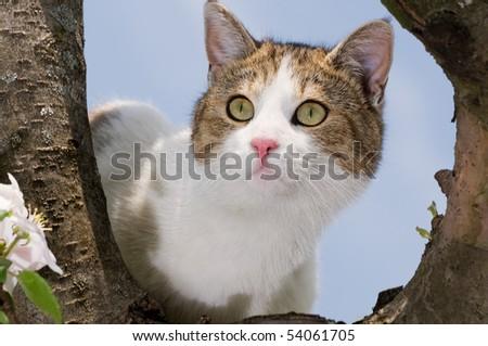 cat climbed on a tree and looks around - stock photo