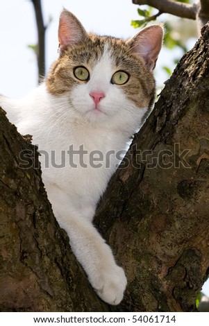 cat climbed on a tree and looks around - stock photo