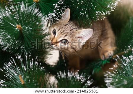 Cat climbing on a new year tree - stock photo