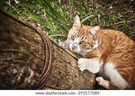 Cat climbs the pole. - stock photo