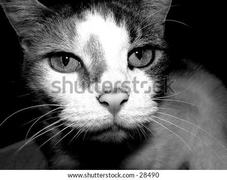 cat close up - stock photo
