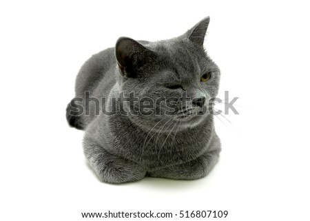 cat close up on a white background. horizontal photo.