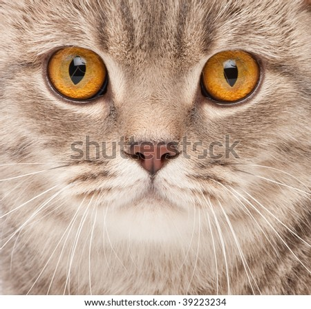 Cat close-up portrait - stock photo