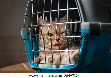 Cat closed inside pet carrier - stock photo