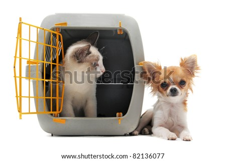 cat closed inside pet carrier and chihuahua isolated on white background - stock photo